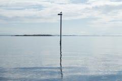 Mouette solitaire sur un Polonais dans l'océan images libres de droits