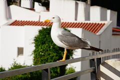 Mouette sur la balustrade de balcon, Portugal Image stock
