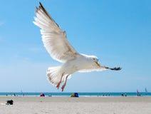 Mouette sur la plage Image stock