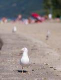 Mouette sur la plage Image libre de droits