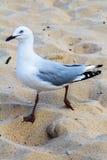 Mouette sur la plage Photographie stock libre de droits