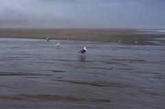 Mouette sur la plage brumeuse photographie stock libre de droits