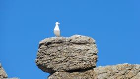 Mouette sur la roche Images libres de droits
