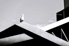 Mouette sur le bâtiment, noir et blanc photo stock