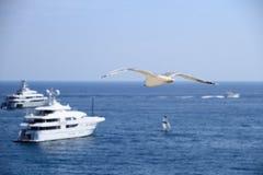 Mouette sur le ciel bleu au-dessus des bateaux et de la mer Photographie stock libre de droits