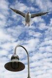 Mouette sur le décollage Photo libre de droits
