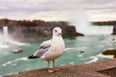 Mouette sur le fond des chutes du Niagara et de la rivière Niagara image stock