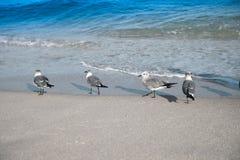 Mouette sur le Miami Beach Photos libres de droits