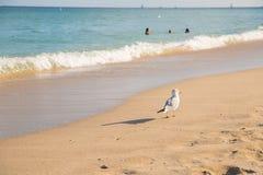Mouette sur le Miami Beach Photos stock