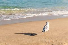Mouette sur le Miami Beach Images libres de droits
