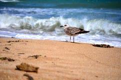 Mouette sur le rivage Photographie stock libre de droits