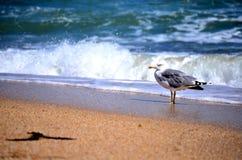 Mouette sur le rivage Photos stock