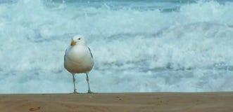 Mouette sur le rivage Photo stock