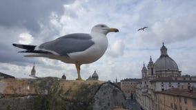 Mouette sur les dessus de toit de Piazza Navona Images stock