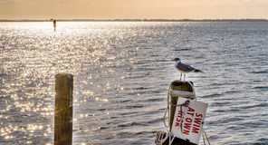 Mouette sur Pier Overlooking Shimmering Sea Photos stock