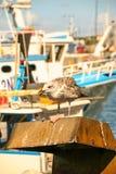Mouette sur un bateau Image stock