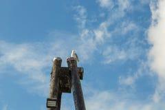 Mouette sur un poteau Image libre de droits