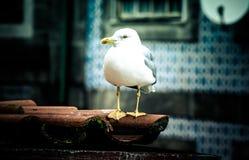 Mouette sur un toit carrelé photographie stock