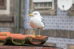 Mouette sur un toit carrelé images libres de droits