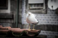 Mouette sur un toit carrelé image stock