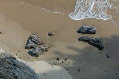 Mouette sur une roche photo stock