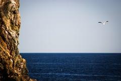 Mouette volant au-dessus de l'océan bleu profond avec la falaise énorme dans le premier plan Images libres de droits
