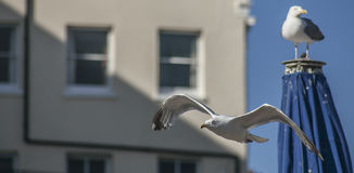 Mouettes à Brighton photo stock