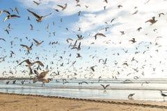 Mouettes à l'océan Image libre de droits