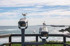 Mouettes à la surveillance Images libres de droits