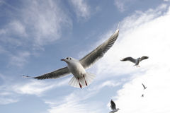 Mouettes Photo stock