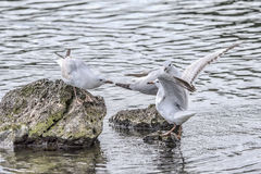 mouettes image stock