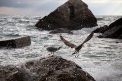 Mouettes attendant les vagues Photo libre de droits