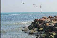 Mouettes au-dessus de la mer photos libres de droits