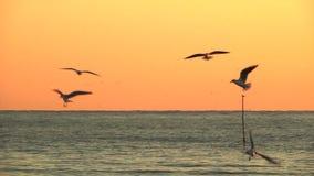 Mouettes au-dessus de la surface de mer au coucher du soleil clips vidéos