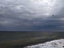 mouettes au-dessus des vagues dans la tempête images stock