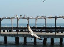 Mouettes au dock Photographie stock libre de droits