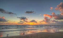 Mouettes au lever de soleil photographie stock libre de droits