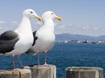 Mouettes au Roi Harbor Pier, CA Photographie stock