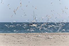 Mouettes chez Sunny Beach Photo libre de droits