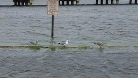 Mouettes détendant pendant une tempête image libre de droits