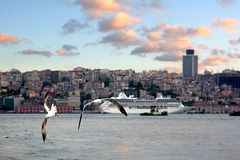 Mouettes d'Istanbul Photos stock