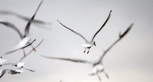 Mouettes dans l'image rêveuse de haut-clé en ciel de vanille photographie stock libre de droits