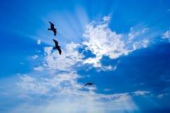 Mouettes dans le ciel Photos libres de droits