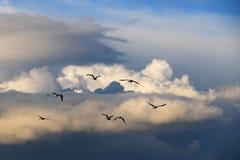 Mouettes dans le ciel Images stock