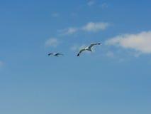 Mouettes dans le ciel Image libre de droits