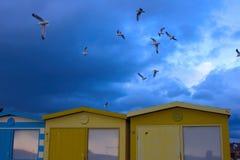 Mouettes dans le ciel au-dessus des huttes de plage dans Seaford images stock