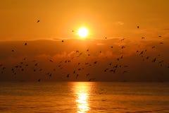 Mouettes dans le coucher du soleil Images libres de droits
