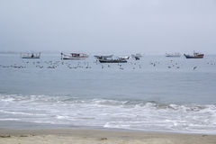 Mouettes dans un jour nuageux Image libre de droits