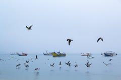 Mouettes dans un jour nuageux Photo libre de droits