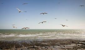 Mouettes de glissement à la plage d'Ovingdean, East Sussex, R-U images stock